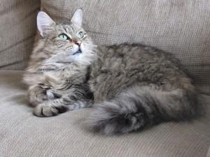 cat-1107338_640